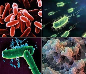 EM_erjeszto_bakteriumok